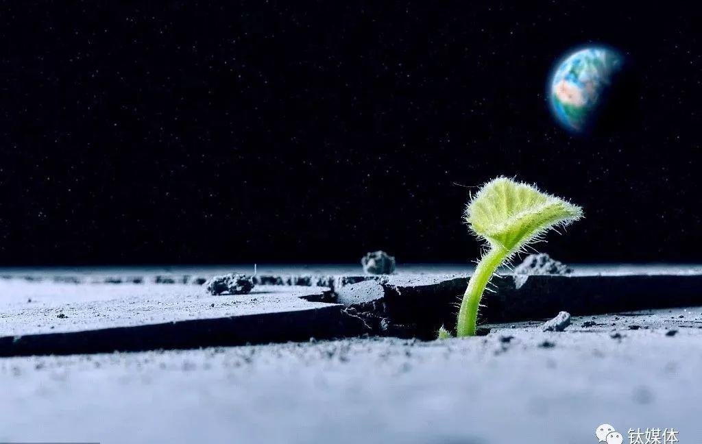 月球上第一株植物死亡悬疑-数据报告