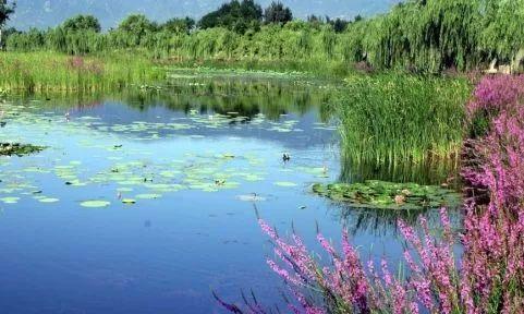 湿地公园 北京10大湿地公园 很多人都不知道!