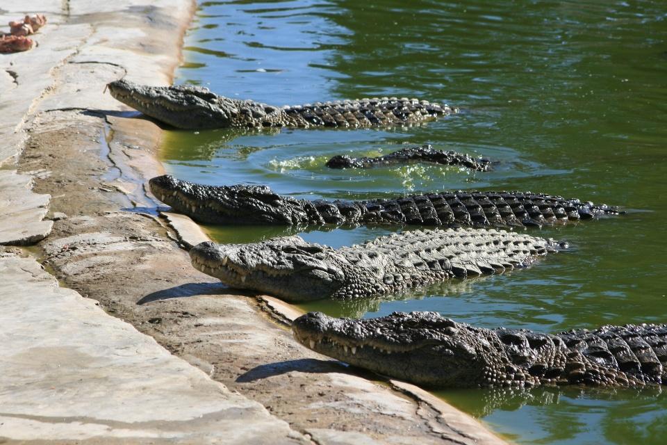 """""""鳄鱼蛋""""引发的法律纠纷:Prada(普拉达) 向鳄鱼皮供应商 Capo-USA 索赔"""