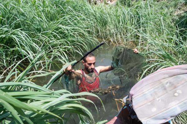 小龙虾曾被埃及渔民视为诅咒直到被中国吃货发现