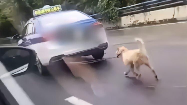 """的哥开出租车""""遛狗""""还穿梭变道?网友:看着心酸"""