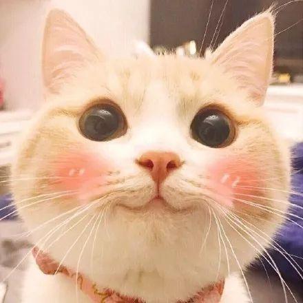 壁纸 动物 猫 猫咪 小猫 桌面 440_440