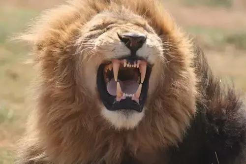 涨姿势:为什么动物从不刷牙,牙齿却依然健康?