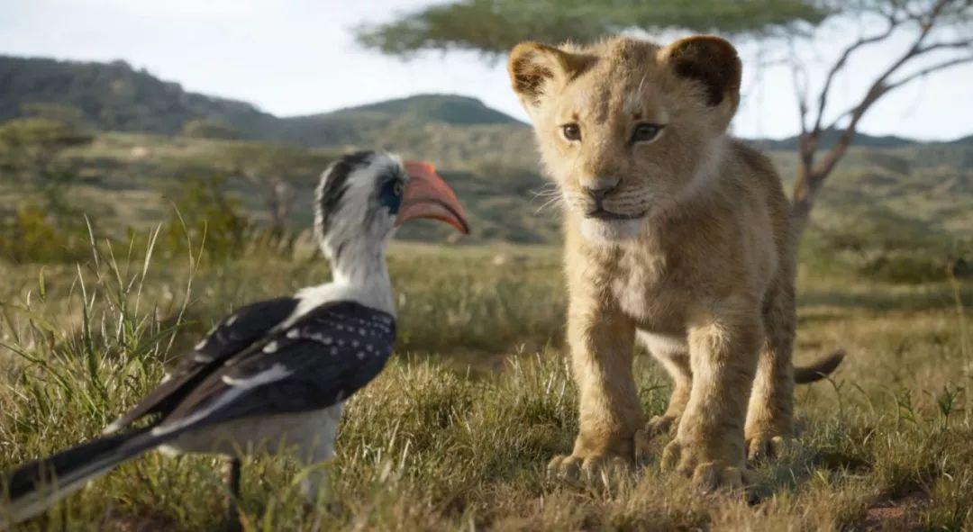 宛如纪录片《动物世界》