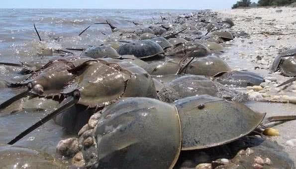 """海滩边出现几千只奇怪的""""乌龟""""身上还有刺,专家警告"""