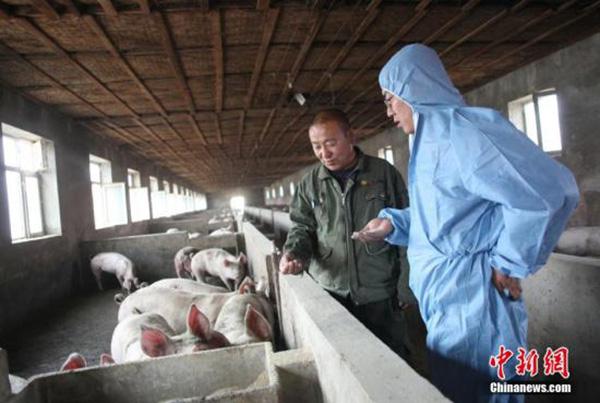 我国发生非洲猪瘟疫情的原因之一:饲喂餐厨剩余物