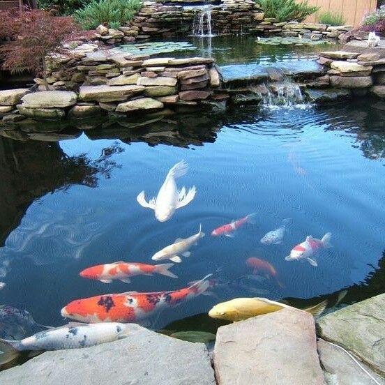 宅以泉水为血脉,庭院锦鲤鱼池的设计拥有旺宅的作用,在风水学上,地上