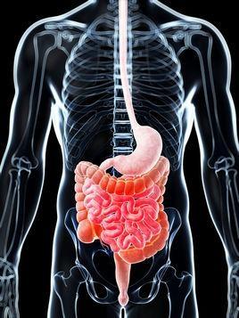 """肠道spa""""肠""""识---认识人体肠道结构"""