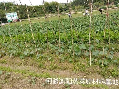 绥滨县川辣红烧牛肉面技术牛肉面培训