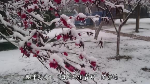 """2019年除夕当天立春,俗语""""寡妇年倒春寒"""",春节期间到底冷吗?图片"""