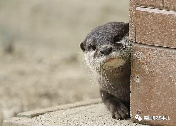 萌翻喵星人为啥吐舌头?北极熊干遮住小鼻子?蜗牛酷跑图片