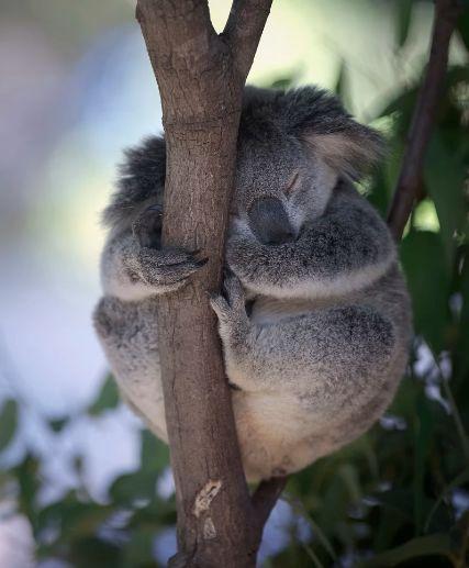 本土动物保护区,拥有澳洲 最丰富的野生生物种类,在这 你可以拥抱考拉
