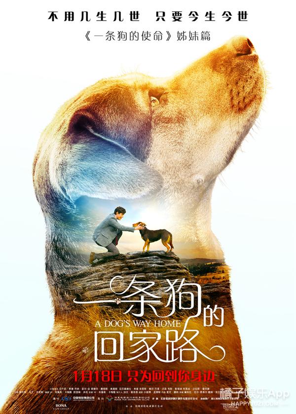 """一条狗的回家路》定档118_马达现身为""""新欢""""代言"""