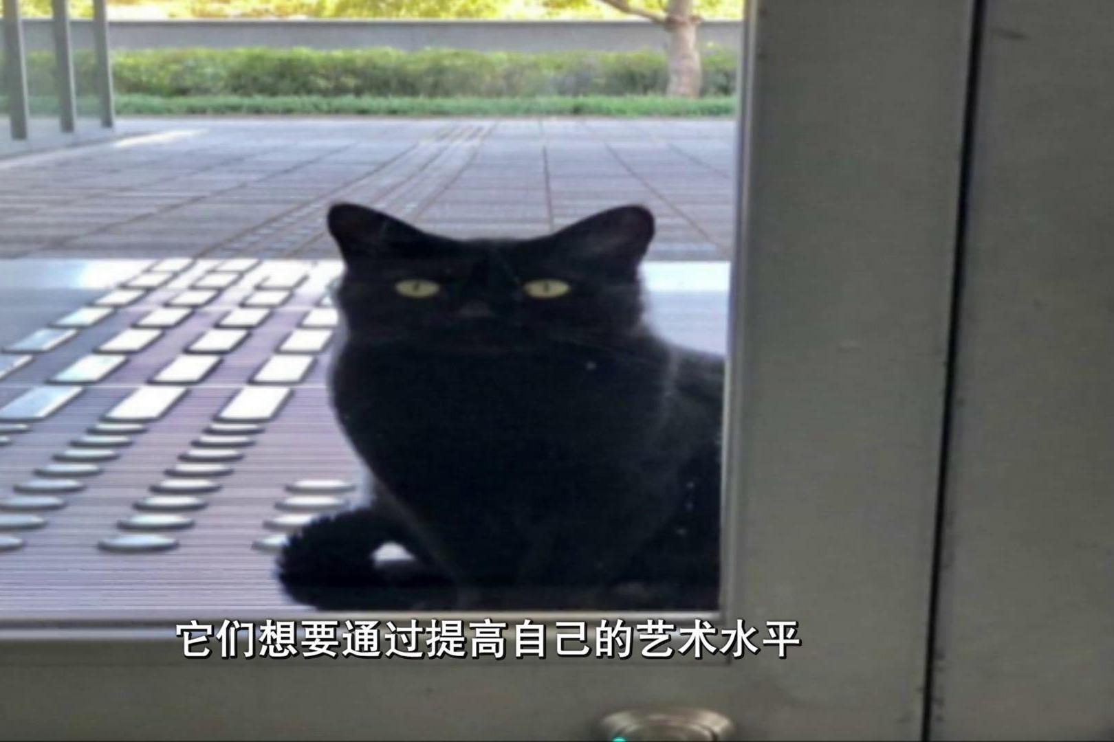 日本有两只文艺猫咪 比人类还有毅力