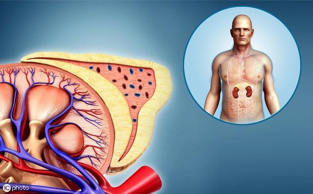 春天男性吃什么补肾?坚持吃这些,维护肾脏,远离肾病