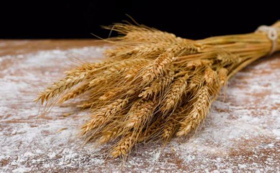 7.28常见的小麦,若是用的妙,就是一味难得的好药