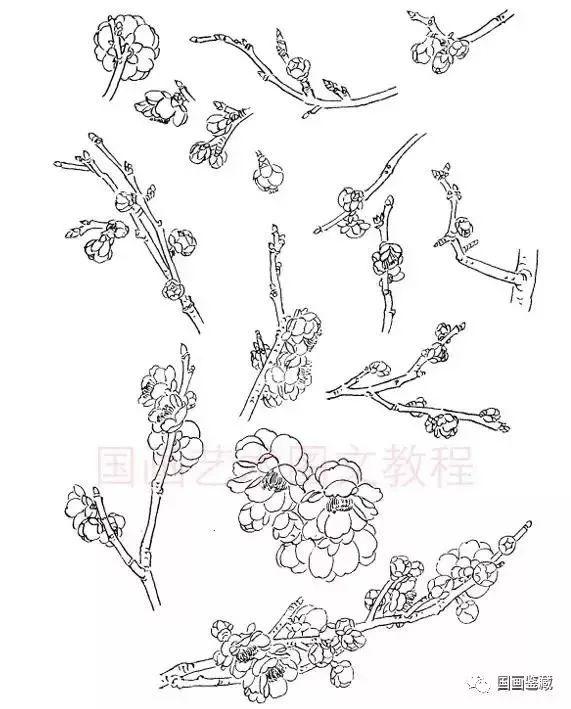 腊梅 腊梅又称黄梅、香梅。落叶灌木,高2-4米,黄褐色,皮孔明显,花香浓郁,树龄可达五到六百年。  腊梅花蕾 腊梅花蕾外层覆盖着覆瓦状排列的鳞片,花两性,单生,有浓香。花瓣外轮廓腊黄而大,内轮常在淡黄底色上有紫褐色短条纹,雄蕊5-6枚。  腊梅枝干较为光洁、修长。   梅花枝干组合 梅花开时无叶,花和枝干就是表现梅花形象的两大部件。枝干的走向、交叉、曲直、宾主尤为重要。  艺术表现需要对比,梅花基干必然粗大,新枝必然细瘦,让它们组合在一起则相映成趣。   新枝修长,生花较密,以之成画,特有一种清新、秀