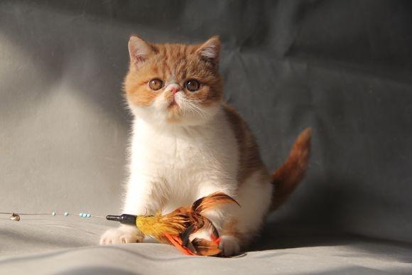 壁纸 动物 猫 猫咪 小猫 桌面 580_387