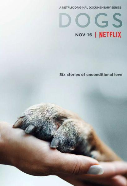 人狗av在线视频 豆瓣9.1,又一部让人爆哭的狗片!