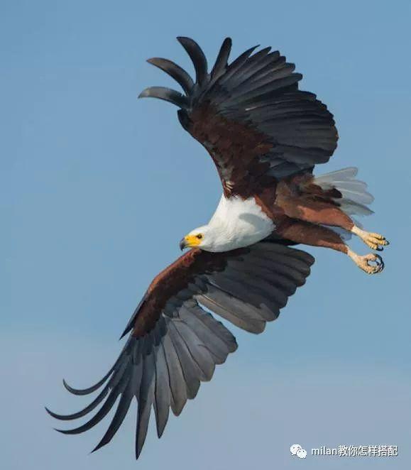 心理学:哪只飞翔的雄鹰最吸引你?测你人生的bgm是什么