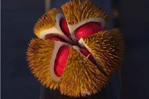 真正爱吃水果的人,能为榴莲花掉50万