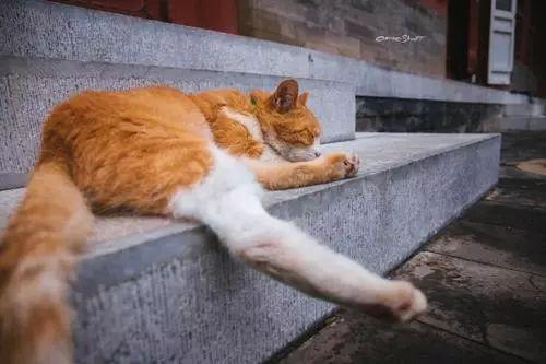 故宫猫走红:猫活出了人类该有的样子_凤凰网旅游_凤凰网
