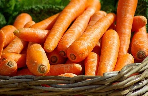 萝卜结构示意图
