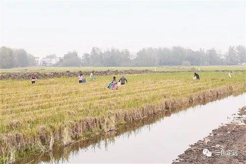 安徽省定远县供销合作社创新生产方式调整优化产业结构