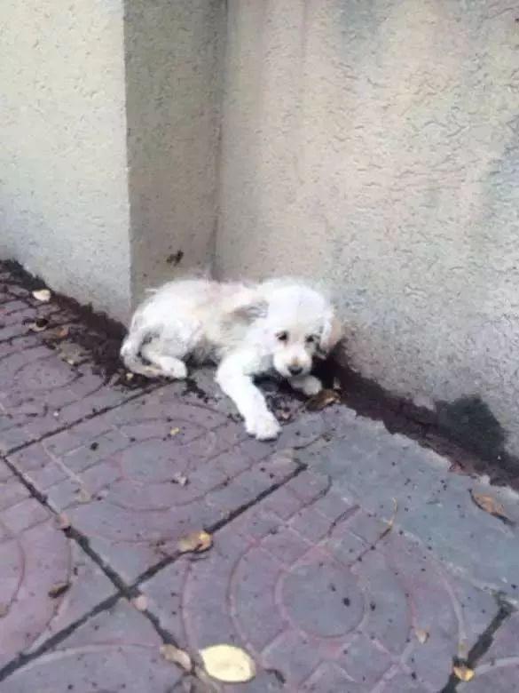 社会上关于流浪动物特别是流浪狗,争议一直没断过,各种声音此起彼伏