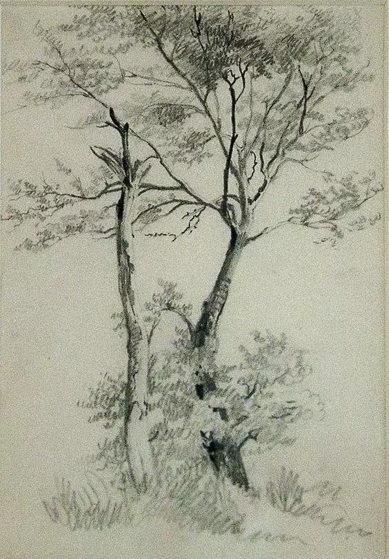 在真正的素描大师笔下 一棵树也可以成为世界上最美的风景 收集了一组