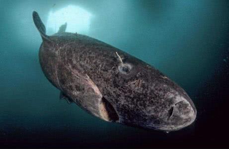 5大稀奇罕有的动物,图3长得像石头,含有剧毒,国人却很爱吃