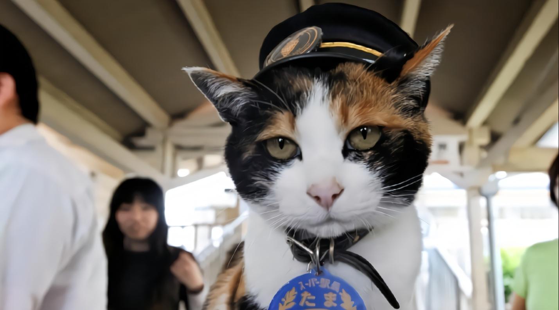 一只猫咪救活了日本的这条列车,它还被封为站长,成当地景点!