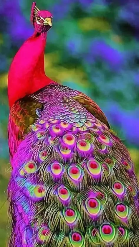 【动物世界】史上最齐罕见鸟类大全