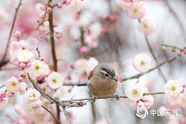 春节假期中东部气温起伏大南方阴雨频繁