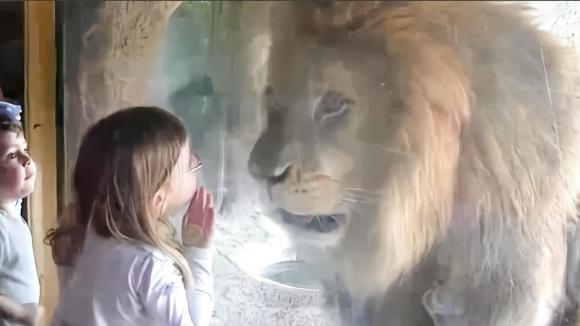 """动物界最""""稀有""""的动物之一,除了狮子没有天敌,被列为"""