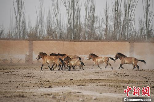 新疆天山野生动物园寻马记