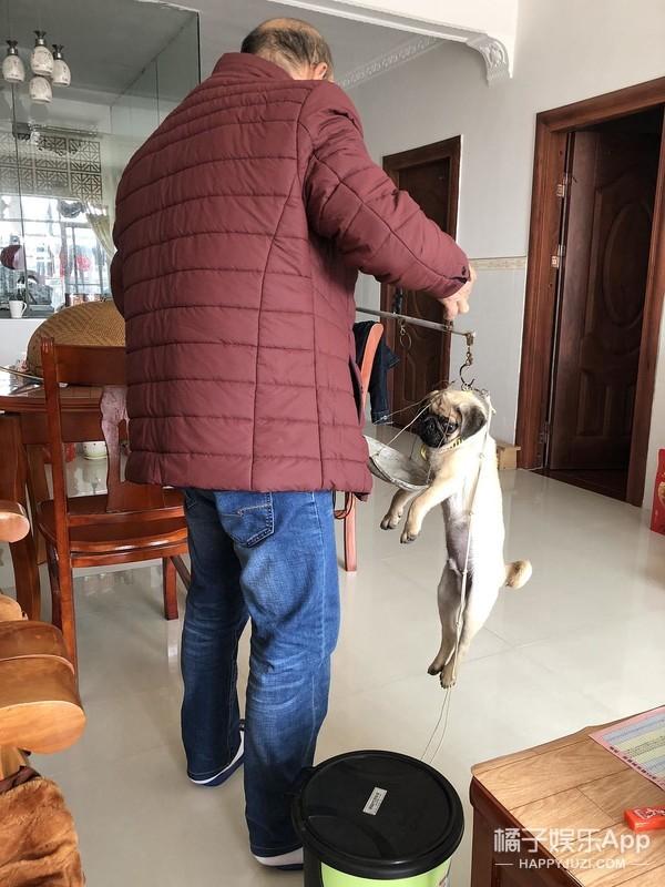 爸妈养了宠物以后…你的地位可能还不如一只狗