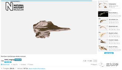 从动物到人体,你想看的骨骼结构这几个网站和app全包了