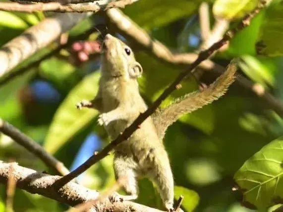 那是小朋友和大自然最美好的连结 游览区内有许多可爱的小动物 穿梭在