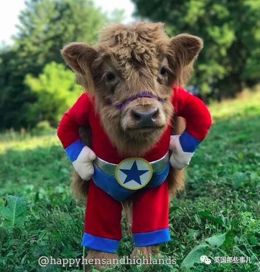 美国夫妻在农场上养了一大群小牛…画风怎么可以这么