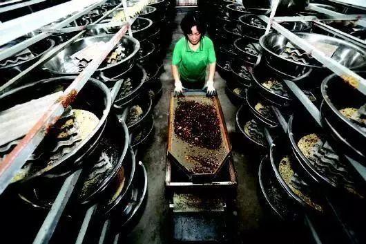 大叔建世界最大的蟑螂工厂,养了10亿只小强 凤凰网科技