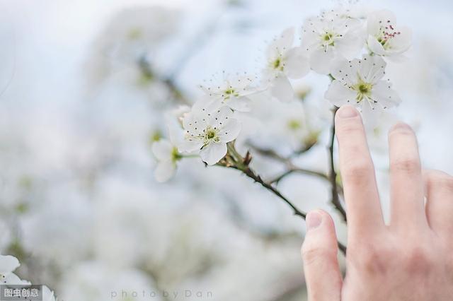 60句古风唯美诗词,每一句都美到不走方物!