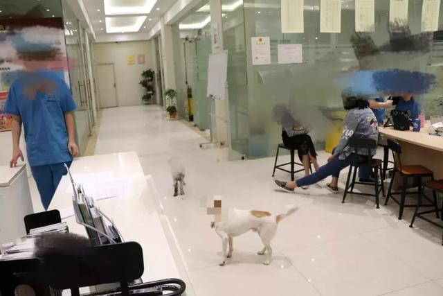 """""""北京大概有300~400家365棋牌娱乐城_365棋牌唯一官网活动_365棋牌电脑下载手机版下载医院,很多宠物殡葬公司都争着跟医院合作,也"""