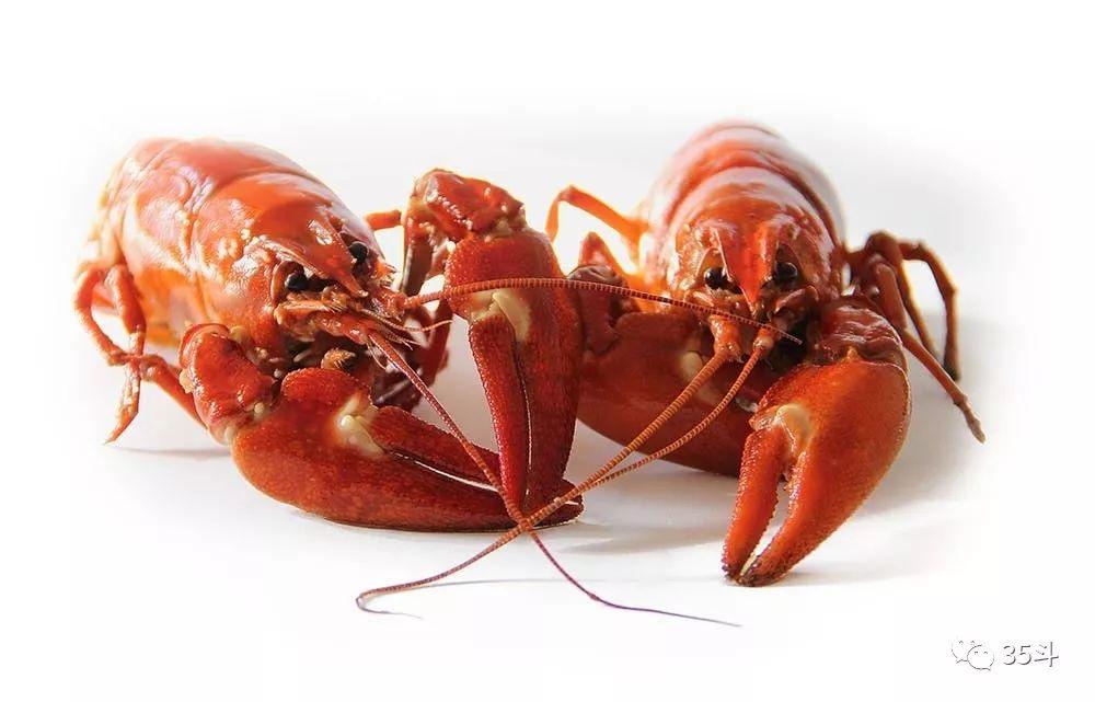 小龙虾:我后悔了,漂洋过海来中国,从入侵物种到盘中餐