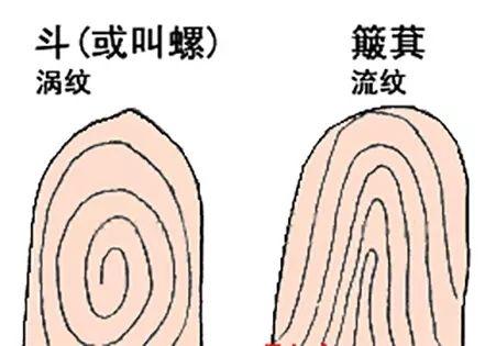 就是呈漩涡状的指纹,或圆形或椭圆形,有整齐的,也有不整齐的,对应的