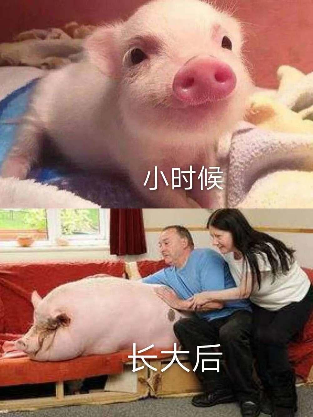 确认过你的脸,你是猪图片