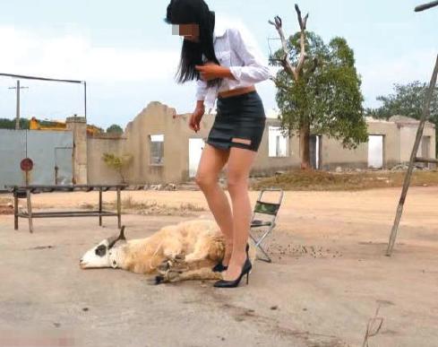 社会  阿佳(化名)虐杀动物的视频,先将一只羊捆绑随后杀死. 视频截图