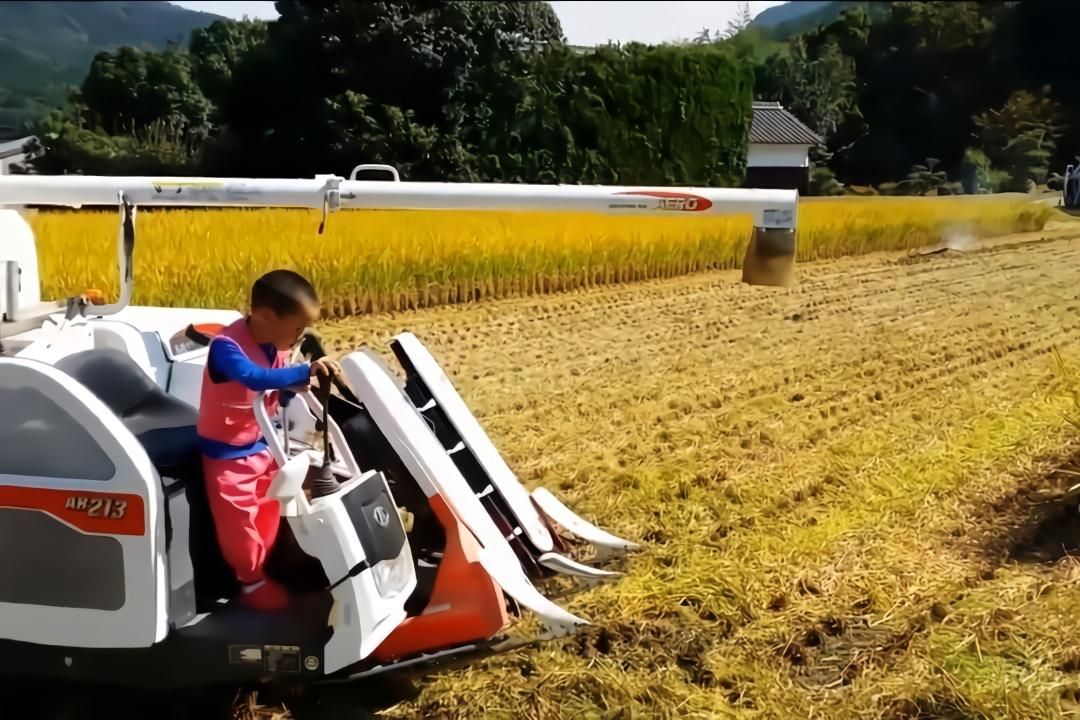 日本的小型水稻收割机,5岁小男孩也能操控自如,太实用了!