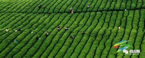 3574万亩,花椒3.5238万亩,精品水果0.7555万亩,茶叶0.图片