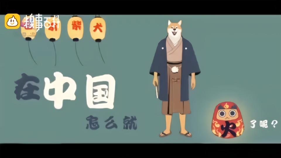 日本柴犬在中国怎么就火了呢?